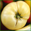 The finest selection of white heirloom tomato seeds that give high yields of rich, creamy tasting ivory white colored tomatoes  that will please even the most hard to please palate. Great White Beefsteak Tomatoes, Cream Sausage Tomatoes, White Wonder Tomato Seeds,  White Beauty Tomatoes, White Queen Tomato seeds, Snow White Cherry Tomato seeds and others.