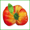 Plant a rainbow in your tomato patch this year by planting our striped and multi-colored heirloom tomato seeds. These tomatoes come in a wide range of sizes and colors and are sure to be a hit with even the most difficult to please tomato gardener or chef!