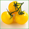 Shop online for our popular yellow heirloom tomato seeds that give high yields of super sweet, golden  tomatoes! The sugar content of yellow tomatoes is so high that they fall into the category of being low acid tomatoes!